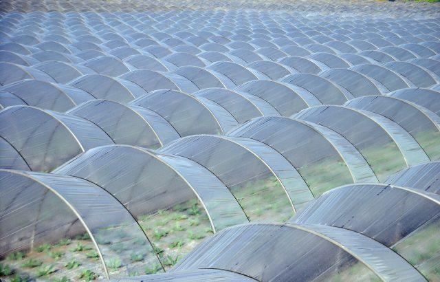 農業用ビニールの廃棄手順、気になる処分費用について。回収費はどのくらいかかる?|画像1