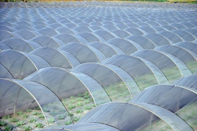 農業用ビニールの廃棄手順、気になる処分費用について。回収費はどのくらいかかる? 画像1