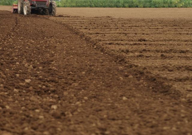 人手不足な農業を支える技能実習生。技能実習制度を適切に活用するために知っておきたいこと|画像1