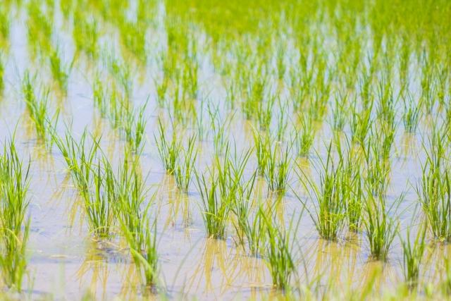 日本農業を転換させる!?メイド・バイ・ジャパニーズとは|画像2