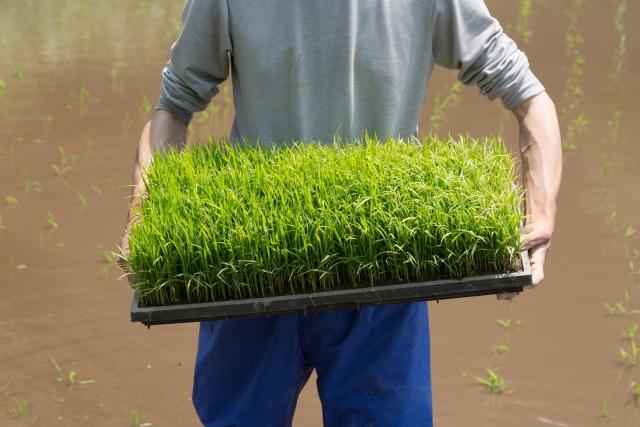 農業が雇用の受け皿に。多様な業界で働く人が人手確保につながる!? 画像1