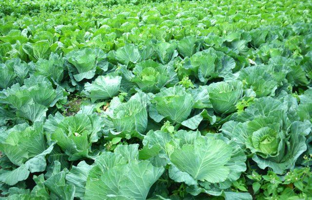 新しい農業の形!?注目集まる農業のフランチャイズ化とそのメリット