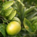 温暖化によるデメリットは栽培面だけではない!流通・販売面におけるデメリット