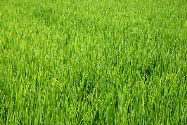 農業全般の基礎知識として学んでおきたい、日本の農業の歴史|画像2