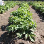 減肥栽培のコツ。コスト削減や環境負荷削減に注目集まる減肥栽培に取り組んでみませんか?|画像1