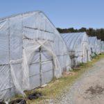 施設園芸の労力&コスト削減に役立つ養液土耕栽培のメリットと留意点とは。|画像1