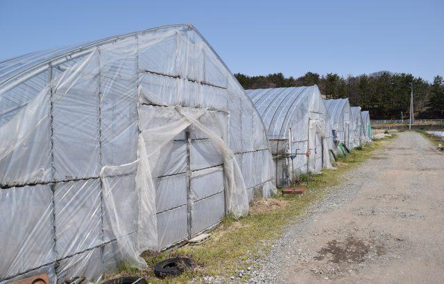 施設園芸の労力&コスト削減に役立つ養液土耕栽培のメリットと留意点とは。