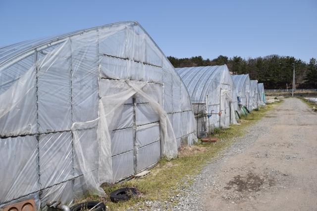 施設園芸の労力&コスト削減に役立つ養液土耕栽培のメリットと留意点とは。 画像1