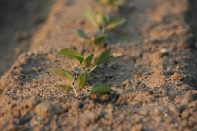 意外と知らない農業の立役者・土壌微生物 〜「硝化菌」について〜|画像2