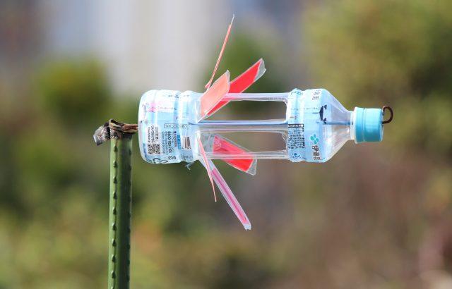 害虫の物理的防除や保温に役立つ!?ペットボトルを活用した農作業アイデアまとめ。