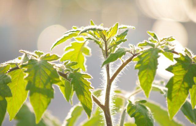 農薬を安心・安全に使用するために知っておきたい基礎知識①。農薬の安全性はどのように確保されているのか。|画像1