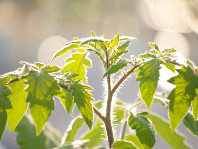 農薬を安心・安全に使用するために知っておきたい基礎知識①。農薬の安全性はどのように確保されているのか。 画像1