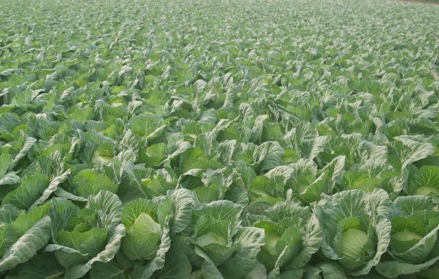 農薬を安心・安全に使用するために知っておきたい基礎知識①。農薬の安全性はどのように確保されているのか。 画像2