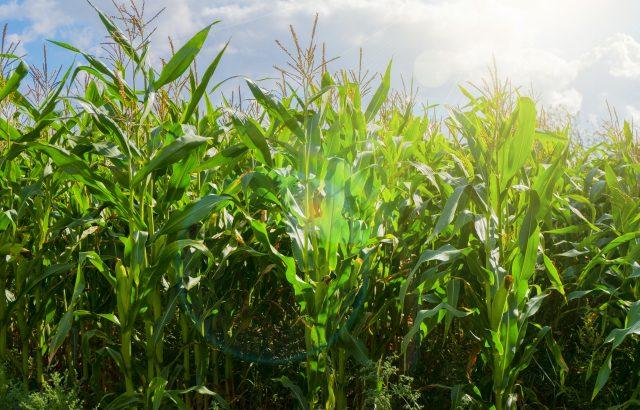 農薬を安心・安全に使用するために知っておきたい基礎知識②。農薬はどのように分解されているのか。