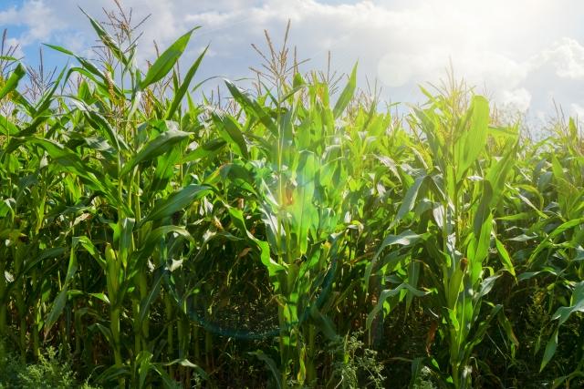 農薬を安心・安全に使用するために知っておきたい基礎知識②。農薬はどのように分解されているのか。|画像1