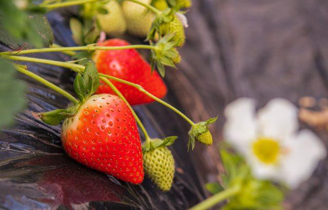 連作障害になりやすい野菜まとめ。連作障害になる仕組みについて。