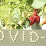 イチゴ狩り発祥の地 〜久能山〜 イチゴ農家の山内里美さんインタビュー 後編 加工品でコロナ対策