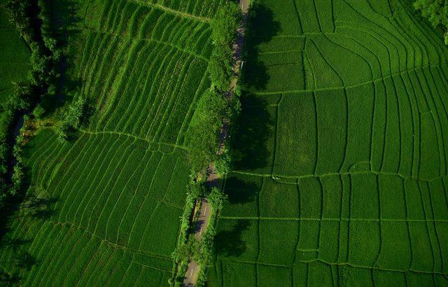 ドローン農薬散布のシェアリングサービス「DRONE CONNECT」とは