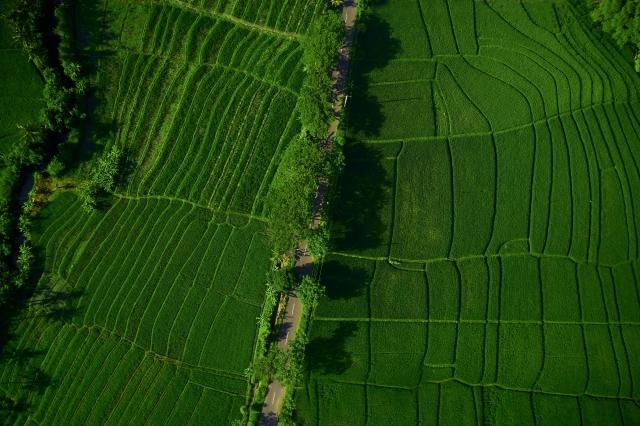 ドローン農薬散布のシェアリングサービス「DRONE CONNECT」とは 画像1