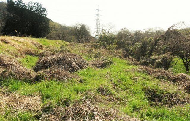 荒廃農地の活用事例。再エネ促進を目的とした荒廃農地の転用規制緩和についても