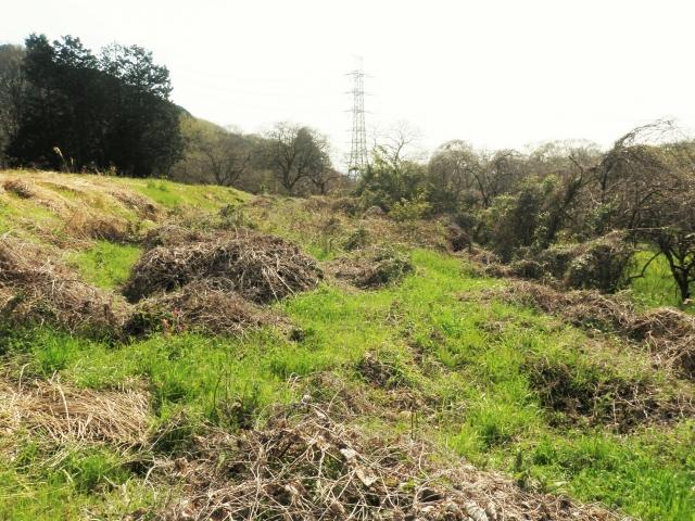 荒廃農地の活用事例。再エネ促進を目的とした荒廃農地の転用規制緩和についても|画像1