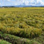 農業気象災害まとめ。風害や塩害など気象災害の種類と対策法について