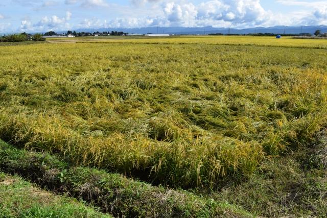 農業気象災害まとめ。風害や塩害など気象災害の種類と対策法について 画像1