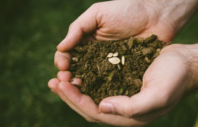 不耕起栽培のメリット・デメリット。不耕起栽培を始める前に知っておきたいポイントと不耕起栽培がもたらす効果や影響について。