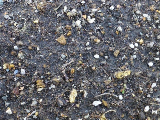 植物への窒素供給に期待!?窒素固定菌「アゾトバクター」とは。|画像1