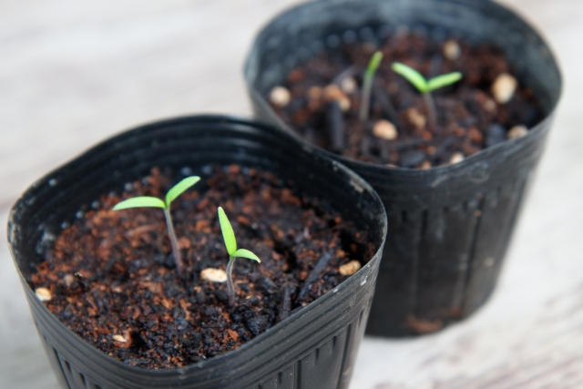 植物への窒素供給に期待!?窒素固定菌「アゾトバクター」とは。|画像2