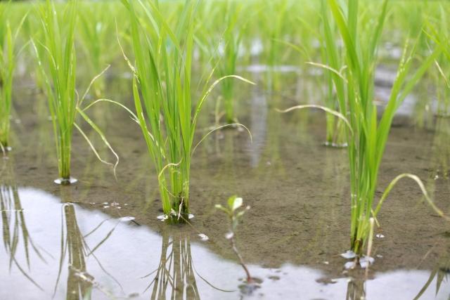 農業と環境の関係。農業と地球環境問題について考える。農業が環境に与える影響とは。 画像2