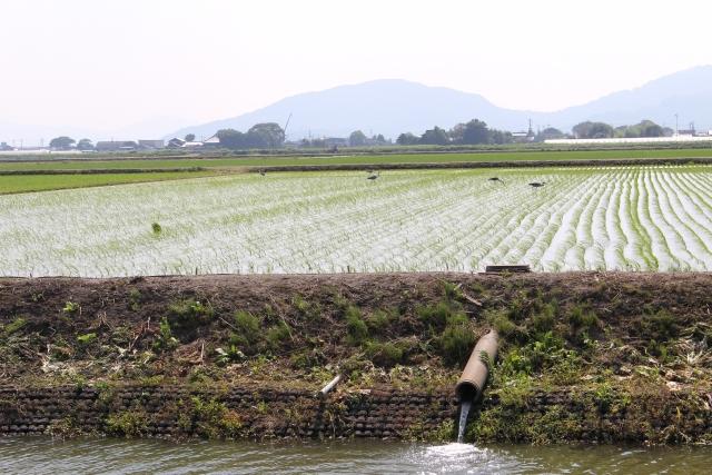 農業と環境の関係。農業と地球環境問題について考える。農業が環境に与える影響とは。 画像3