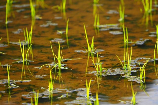 安定的な農業経営のために。稲作後などの水田を利用した野菜づくりについて【後編】|画像1