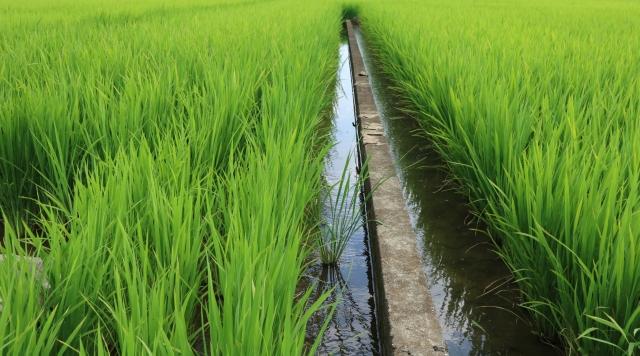 安定的な農業経営のために。稲作後などの水田を利用した野菜づくりについて【後編】|画像2
