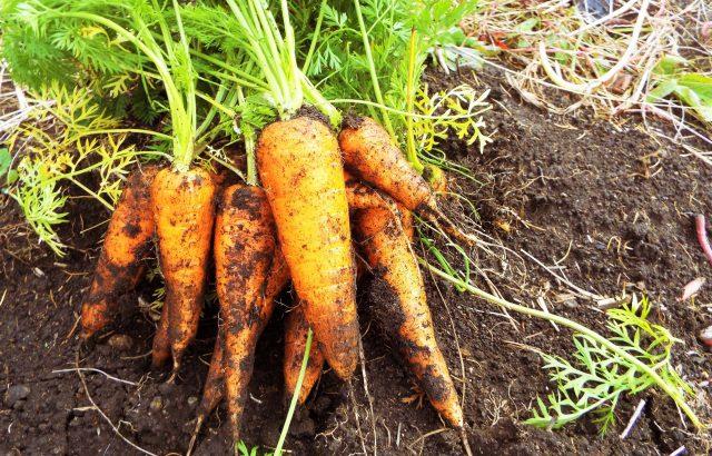 世界で注目されている「リジェネラティブ農業」とは何か。