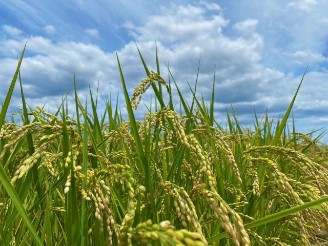 農業について動画で知る、学ぶ。おすすめの農業関連動画まとめ|画像2