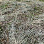 有機物の被覆が干ばつに強い土壌を作る!?有機物被覆による土壌への効果
