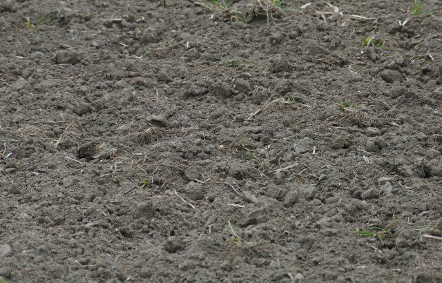 土壌中の炭素の蓄積が気候変動対策につながる理由