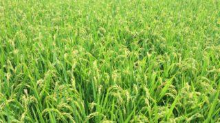 【大規模農家VS小規模農家】メリット・デメリットを比較検証