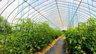 農家の方は知っておくべき!補助金を活用して設備投資する方法!